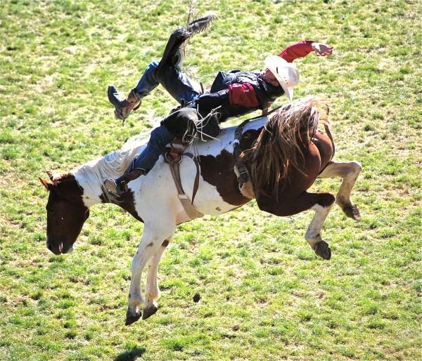 Bronking Horse_Stubborn Perseverance