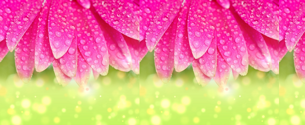 Floral Header Featured Image Size