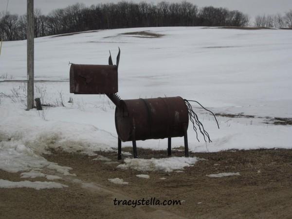 horse CAPTIONED