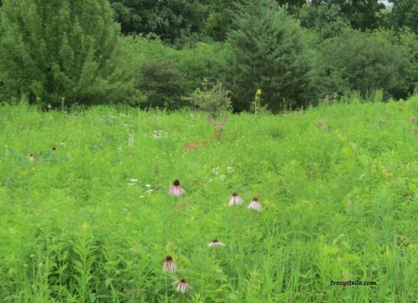 Deer Hide N Seek CAPTIONED