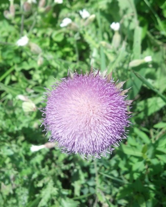 Purple flower pom poms                                                                                               tracystella.com