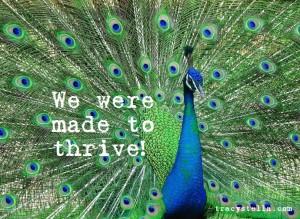 Thrive Peacock 10265959_m